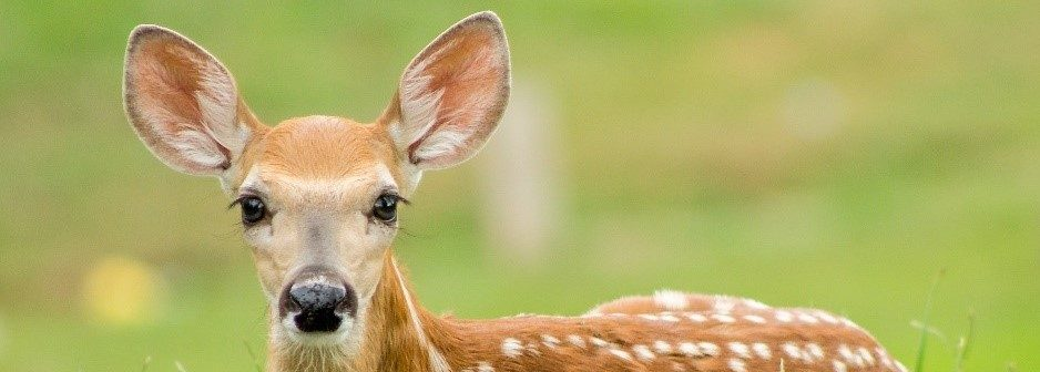 Bambi's Afkar